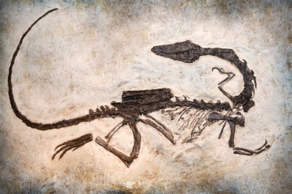 resizedimage600399-Dino-Fossil000018849493Small_2